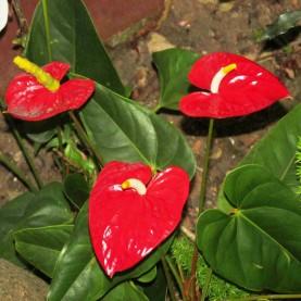 10a - ...As Flores do Jardim da Nossa Casa...