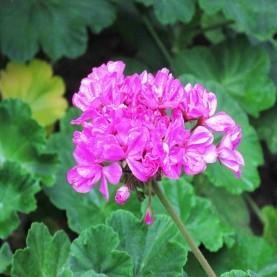 24a - As Flores do Jardim da Nossa Casa
